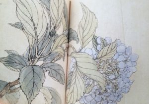 植物画好きなら絶対好き。『人間国宝三代田畑喜八の草花図』