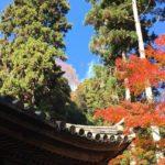 松島、円通院にて紅葉狩りと数珠づくり体験!日本最古のバラの絵も