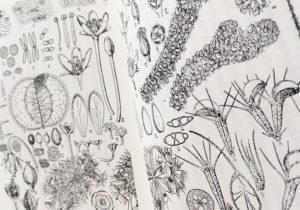 愛だね。植物愛『牧野富太郎 なぜ花は匂うか』